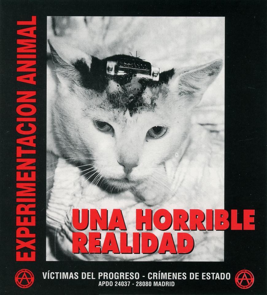 Mistreated cat